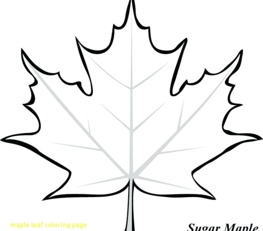 1024x900 Toronto Maple Leaf Colouring Sheets Leaves Coloring Pages Leafs