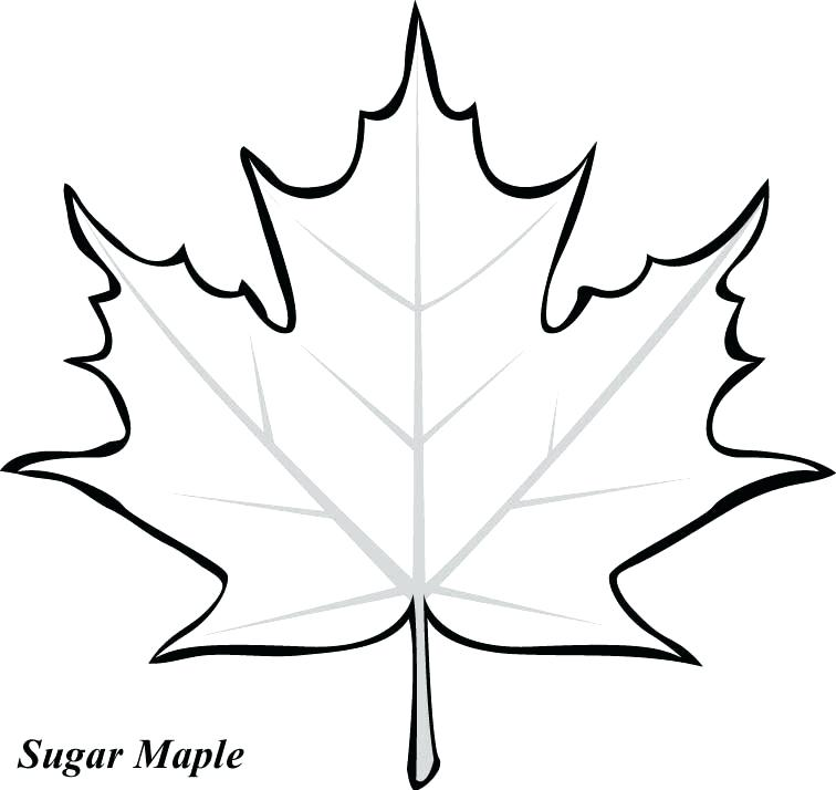 756x714 How To Draw Fall Leaves