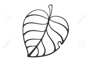 300x210 Cartoon Leaf Drawing Outlined Canadian Maple Leaf Line Cartoon