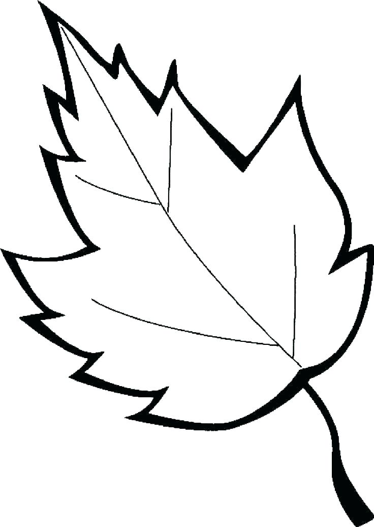 736x1036 Canadian Maple Leaf Coloring