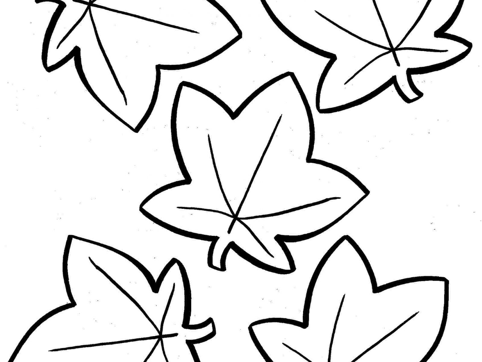 1600x1200 Fascinating Maple Leaf Coloring Sheet Astonishing Leaves The Most