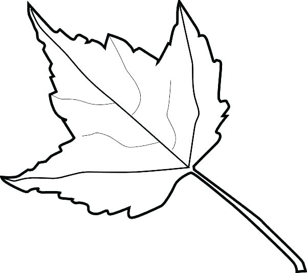 600x533 Maple Leaf Coloring