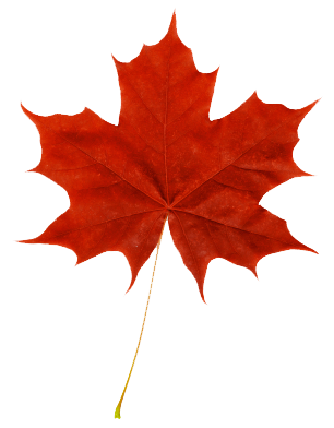 306x392 Red Maple Leaf Fall In Canadian Maple Leaf, Maple Leaf