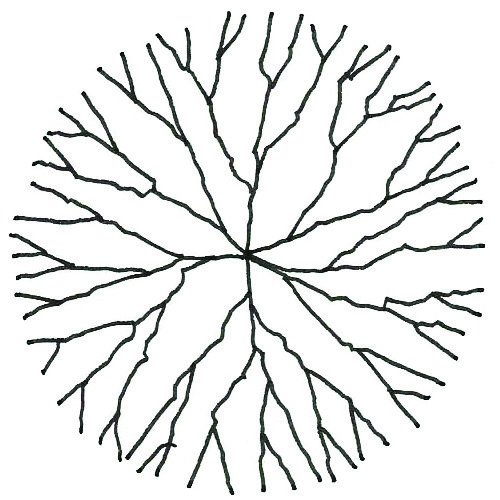 500x500 Drawing Vegetation Hand Drawn Branch Trees In Plan Archilibs