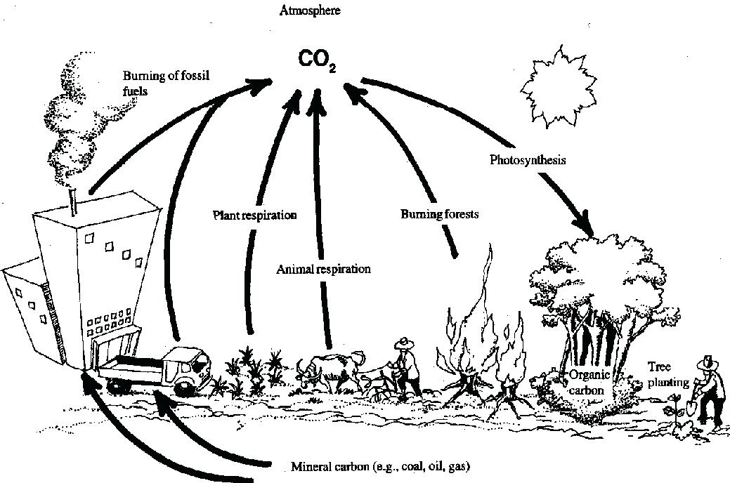 1039x688 carbon cycle worksheets nitrogen cycle worksheet beautiful carbon