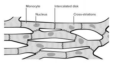 380x214 Cardiovascular System Anatomy Overview, Gross Anatomy, Natural
