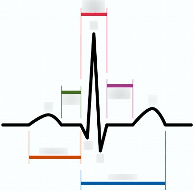 648x638 Electrocardiography Cardiac Cycle Diagram Quizlet