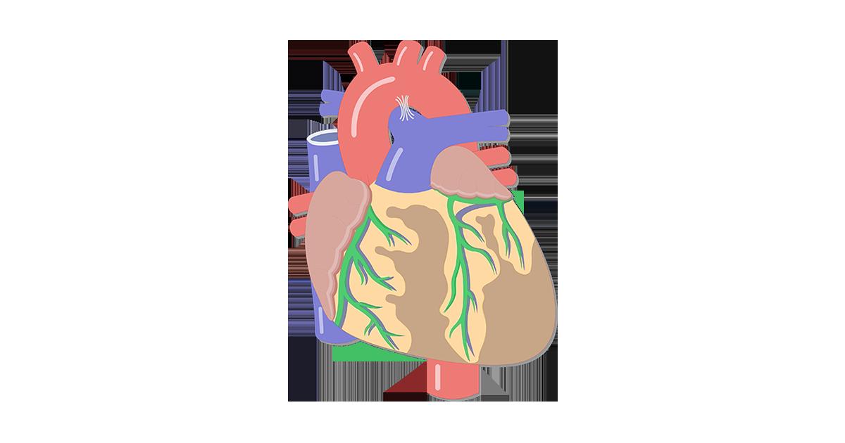 1200x630 Heart Valve Movement