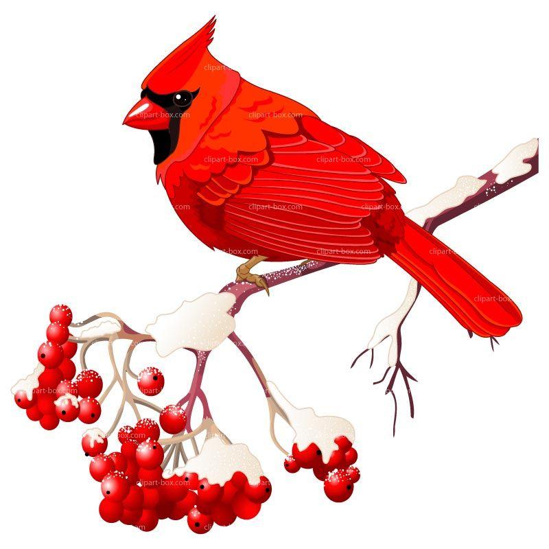 800x800 Cardinal Clipart Free Art Clip Art Images
