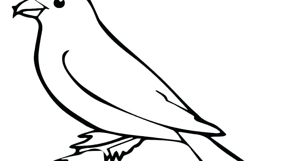 960x544 Cardinal Coloring Pages Preschool Red