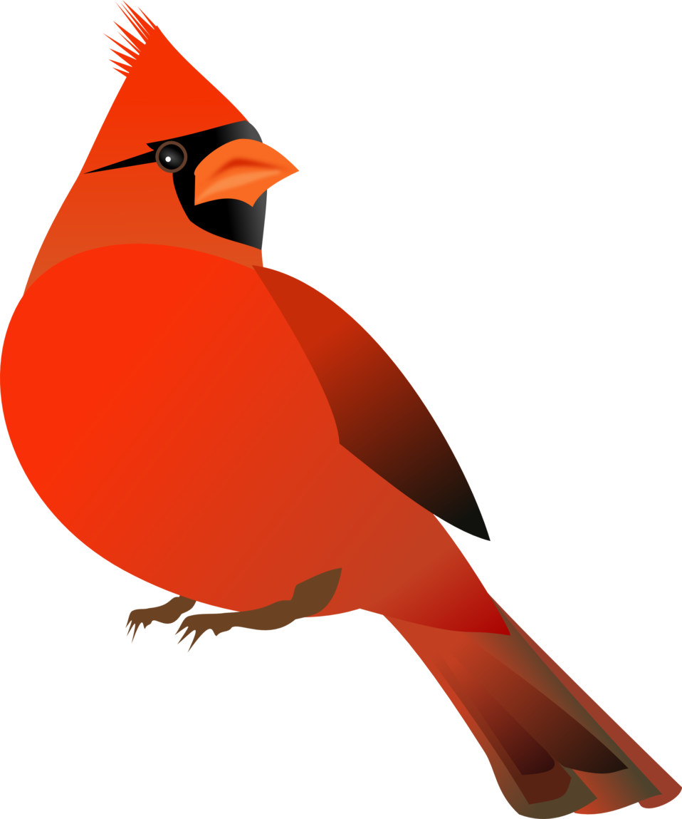 958x1149 Collection Of Free Cardinal Drawing Clip Art Download On Ui Ex
