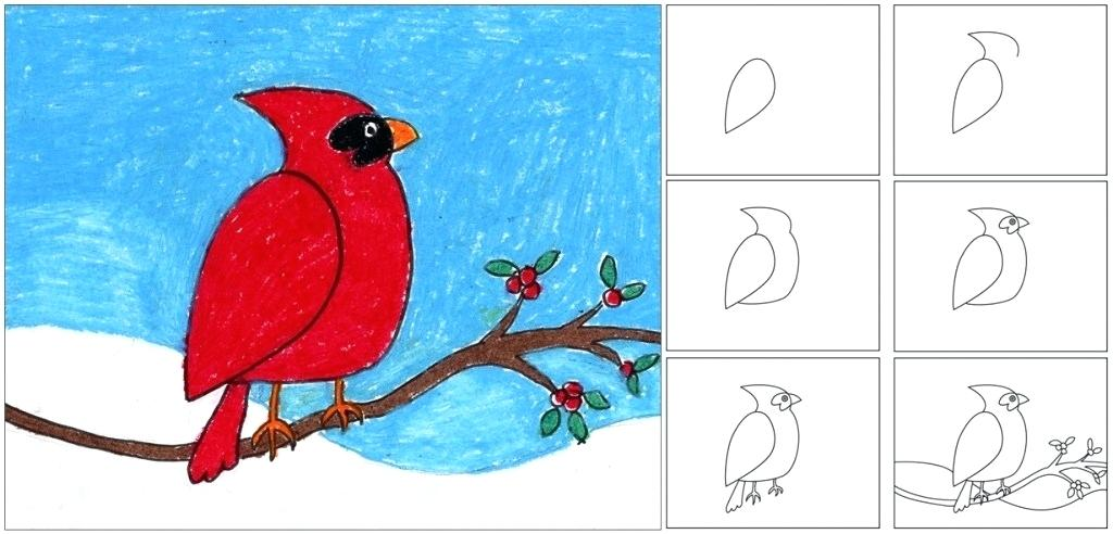 1024x492 Drawing Lesson For Kids How To Draw A Cardinal Architectural