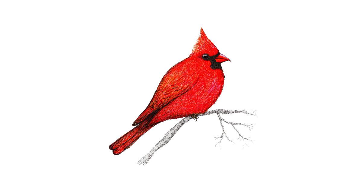 1200x630 Northern Cardinal Pen Drawing