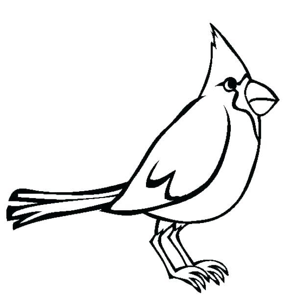 600x612 Coloring Pages Cardinals Bird