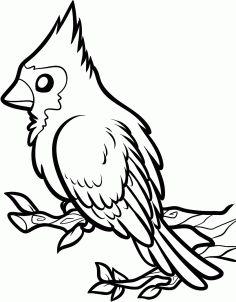 236x302 How To Draw A Red Bird, Red Cardinal Bird Step