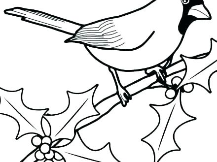440x329 cardinal pictures to color cardinal coloring pages st cardinals