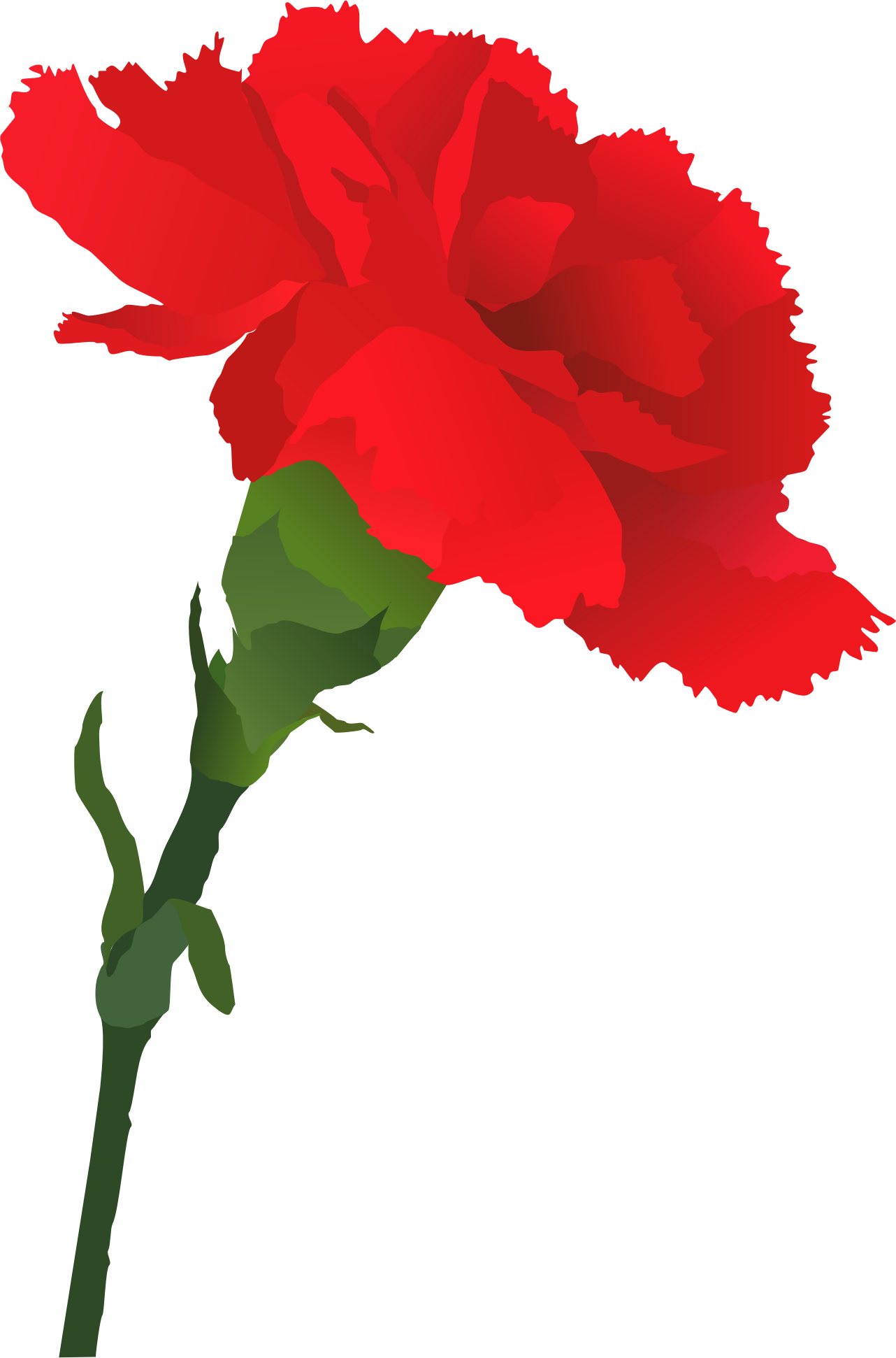 d5fd907b0 Collection of Carnation clipart | Free download best Carnation ...