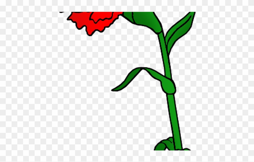 880x561 red flower clipart red carnation