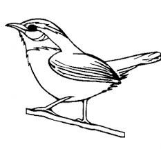 Carolina Wren Drawing