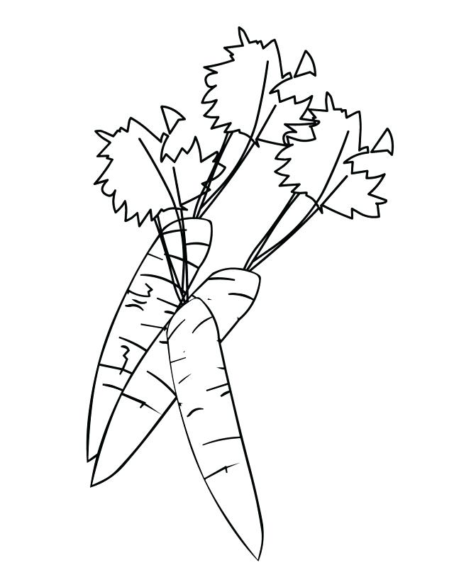 640x828 carrot coloring pages carrot coloring pages coloring book