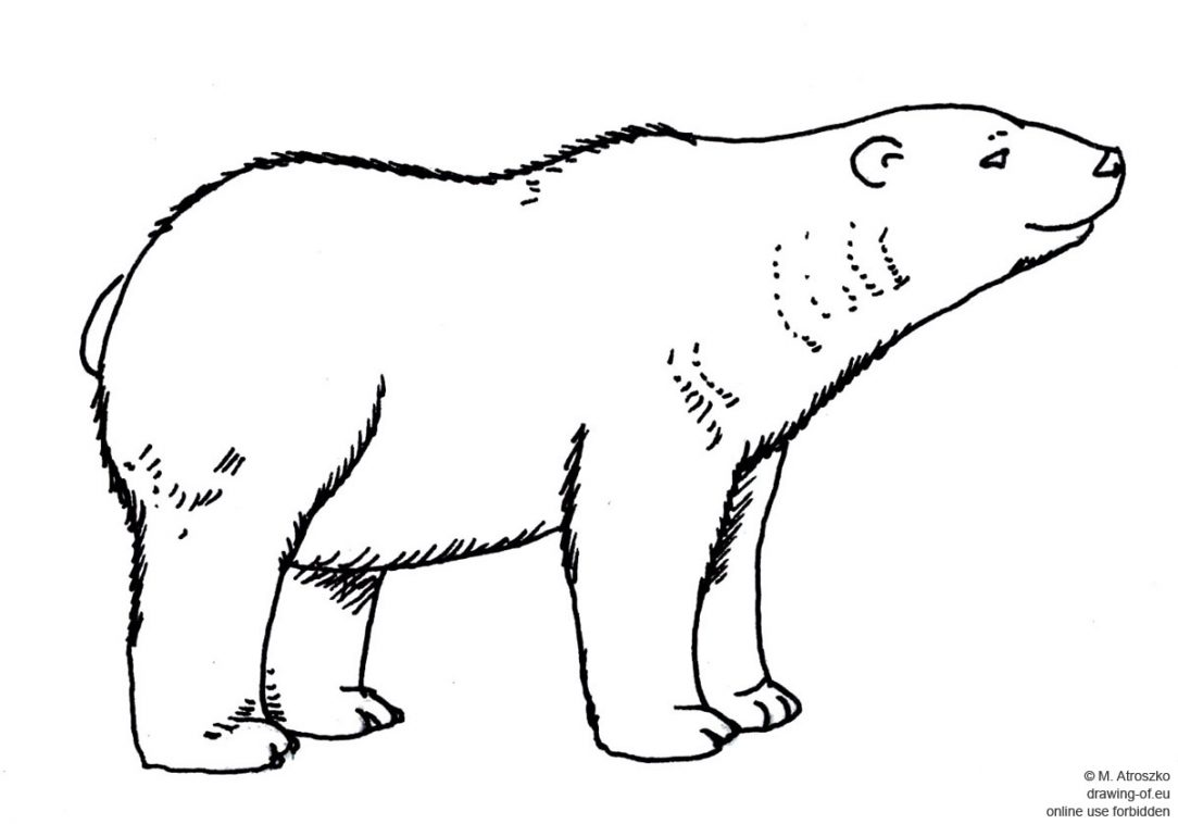 1084x758 Angry Bear Drawings For Beginners Cartoon Black And White Basic