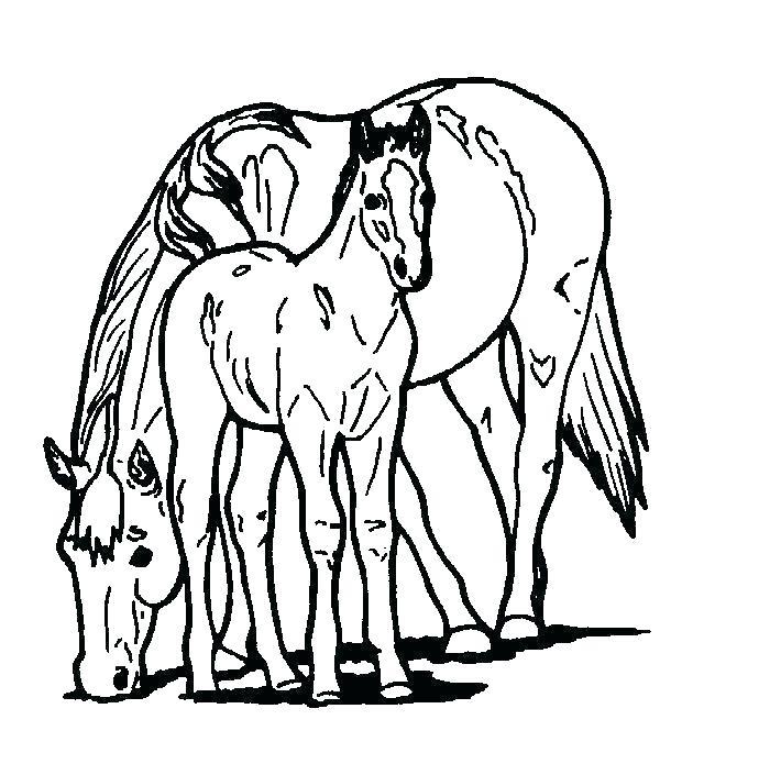 690x705 cartoon baby horse ways to draw a horse baby horse cartoon video