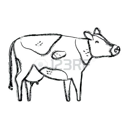 450x450 How To Draw A Cute Cow Step