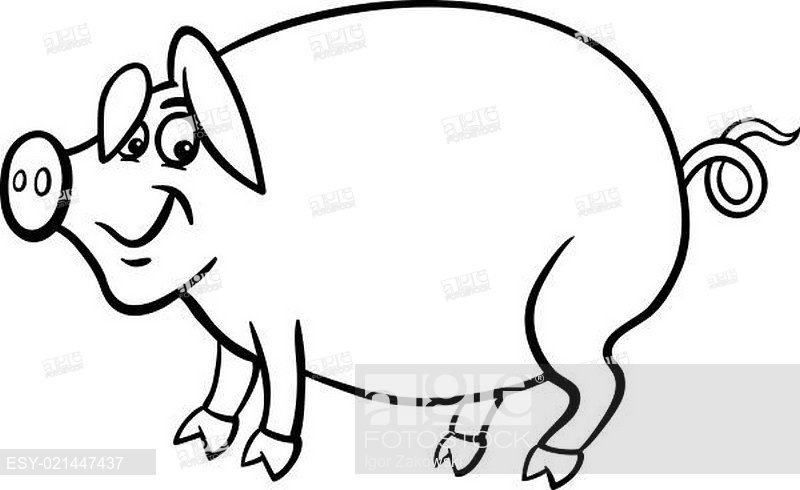 800x490 Farm Pig Cartoon For Coloring Book, Stock Photo, Picture And Low