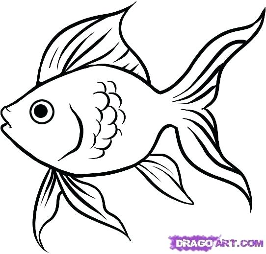 542x519 fish outline drawing tutorials draw cartoon fish tropical fish