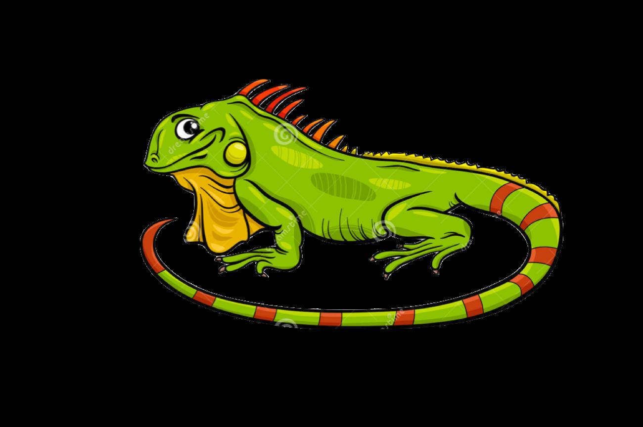 1300x864 reptiles drawing green iguana huge freebie! download