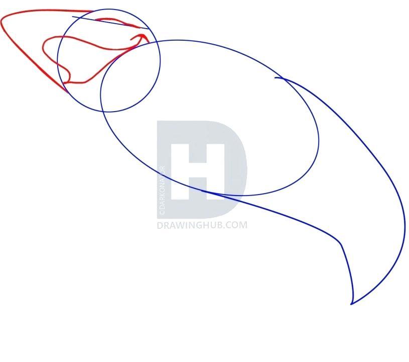 815x720 draw shark draw great white shark draw shark fish