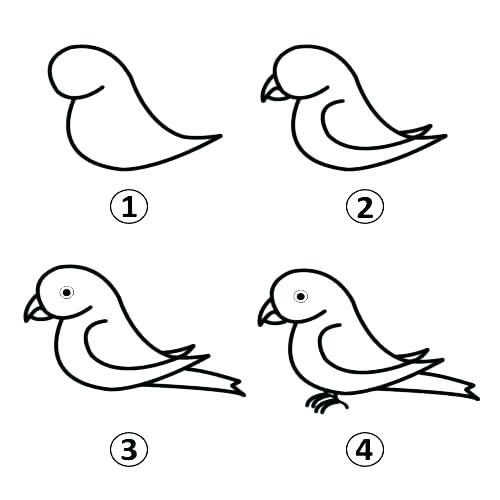 500x500 drawing of parrot easy parrot drawing parrot drawing new parrot