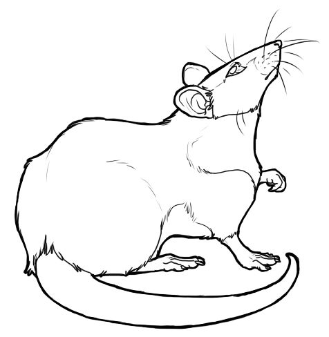 476x488 cartoon rat drawings free rat lineart