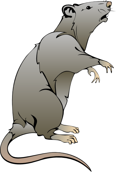 402x596 cartoon rat drawings rat clip art animal drawings