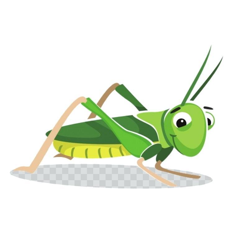 760x750 draw a grasshopper insect grasshopper drawing locust cartoon draw