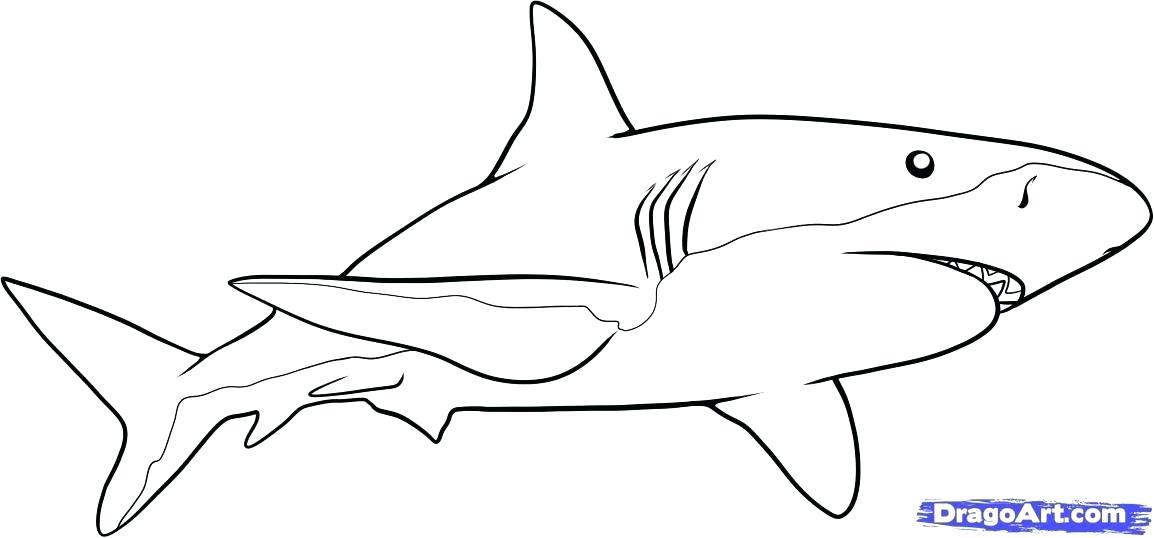 1154x538 cool shark drawings drawn shark pencil x shark cartoon easy