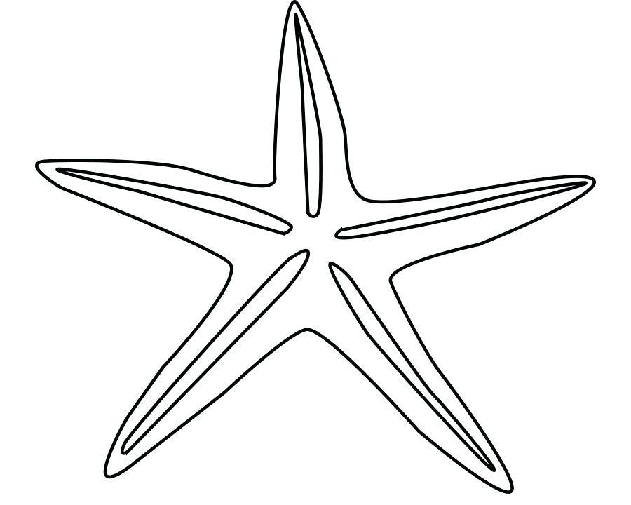 900x720 starfish drawing starfish starfish drawing labeled