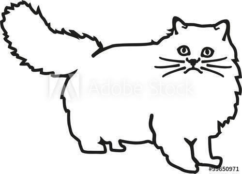 500x359 Persian Cat Contour