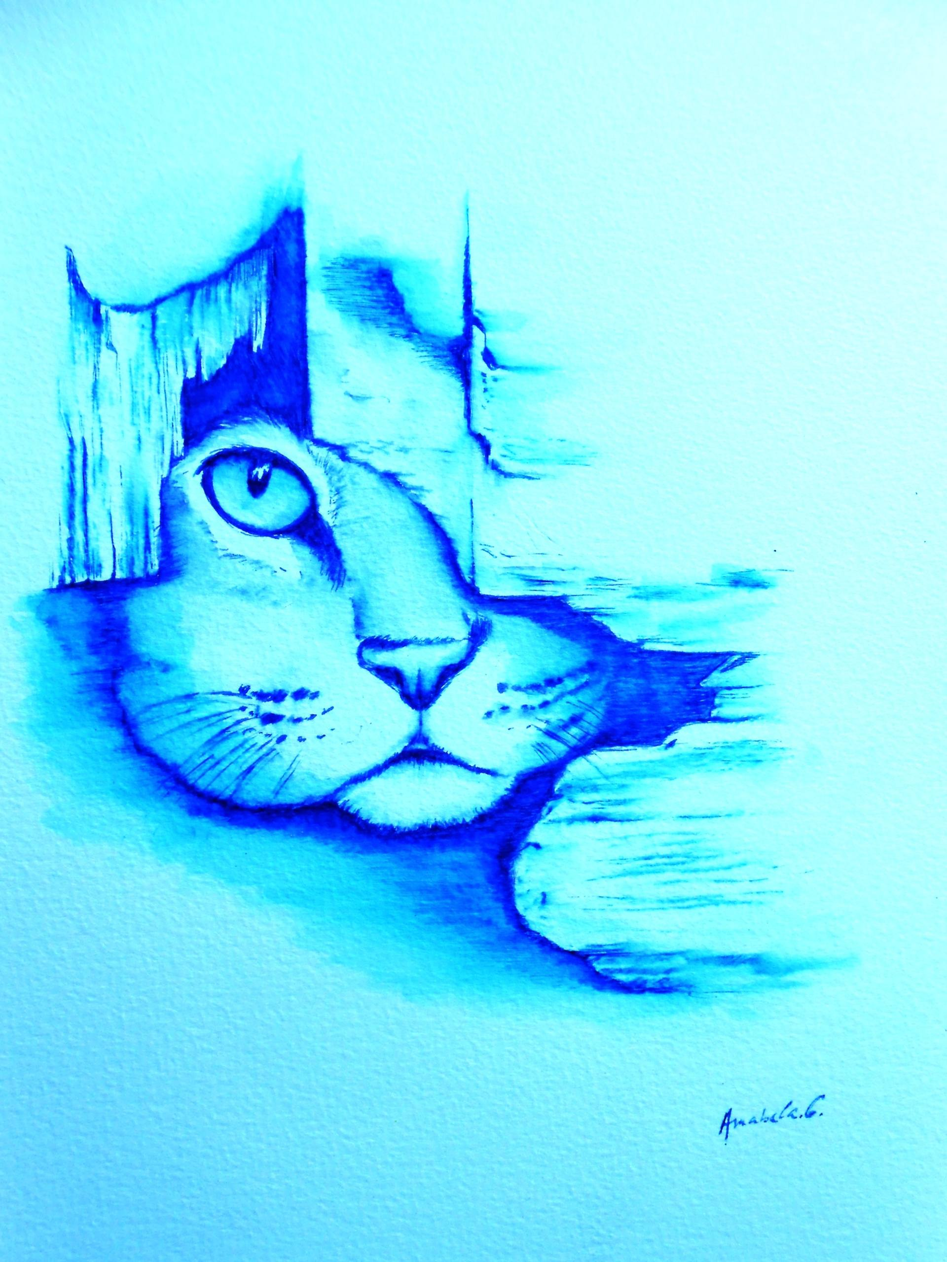 1920x2560 Blue Cat Drawing