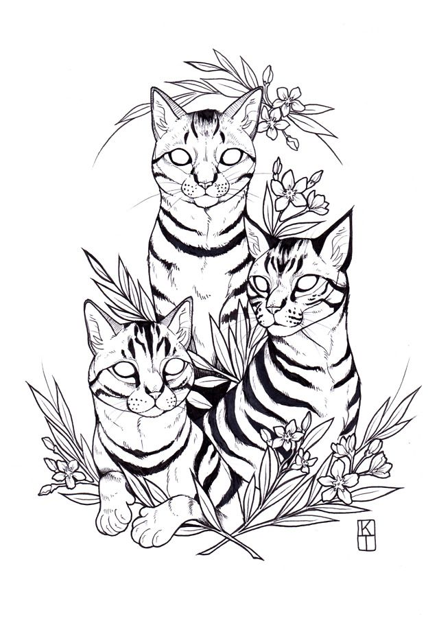 640x905 Cat Drawing In Animal Drawings, Tattoos, Art