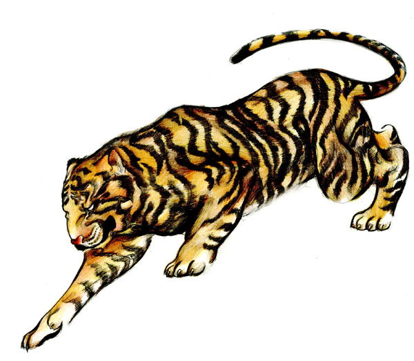 600x523 How To Draw A Tattoo Style Tiger With Colored Pencils