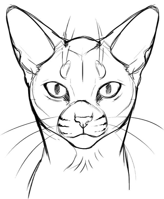 640x775 Things Facing Left Cat Face Tutorial I Guess