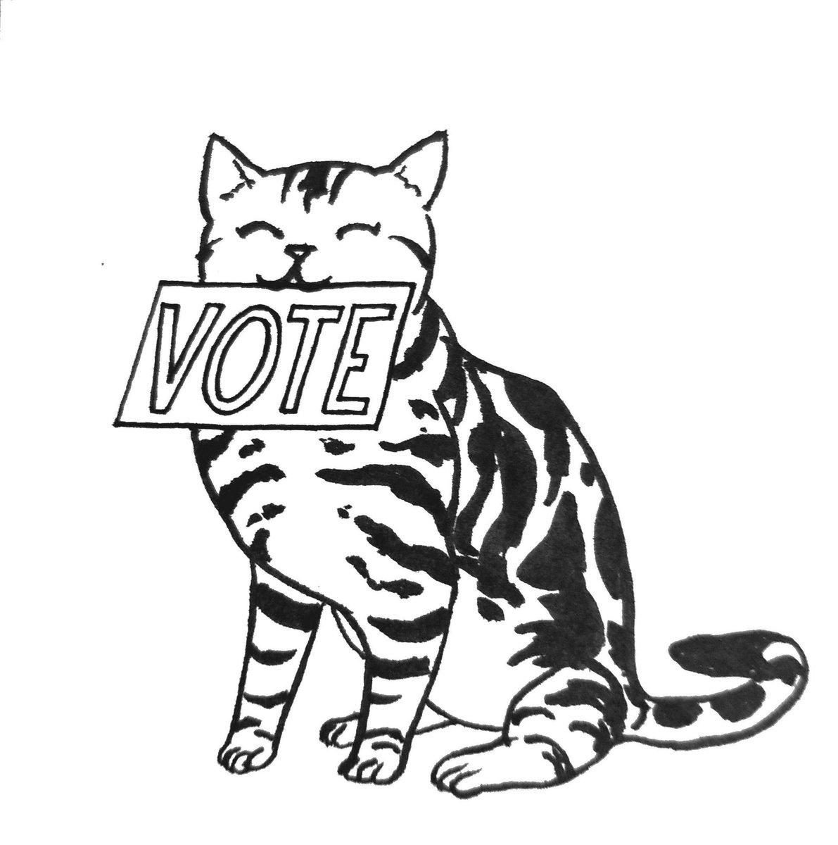 1191x1200 Karen Luk On Twitter Vote! Says American Shorthair Cat Also