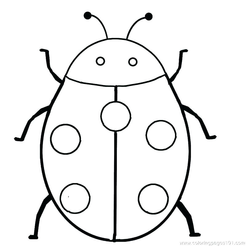 800x800 ladybug coloring pictures ladybug coloring pages ladybug and cat