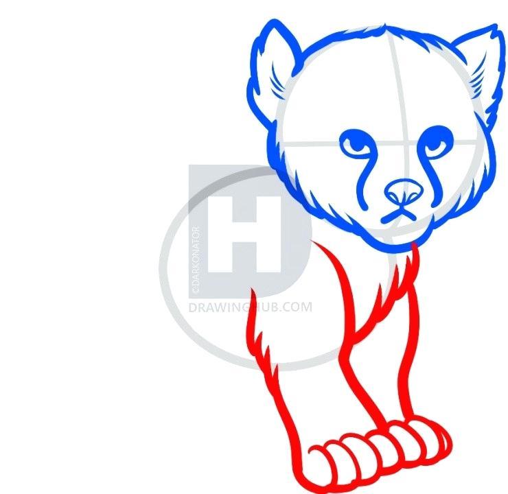 740x720 cheetah face drawing cheetah glory cheetah face pencil drawing