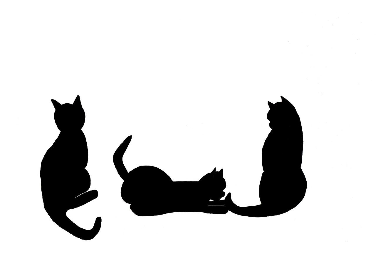 1280x913 Cats, Black Cats, Black, Black Cat, Silhouette