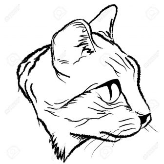 336x336 Cat Whiskers Face Drawing Simple Cheshire Outline Picture Color