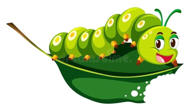 800x468 caterpillar drawing download cute caterpillar chewing green leaf