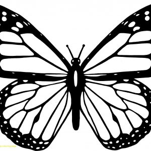 300x300 Caterpillar To Butterfly Coloring Sheet Inspirationa Butterfly