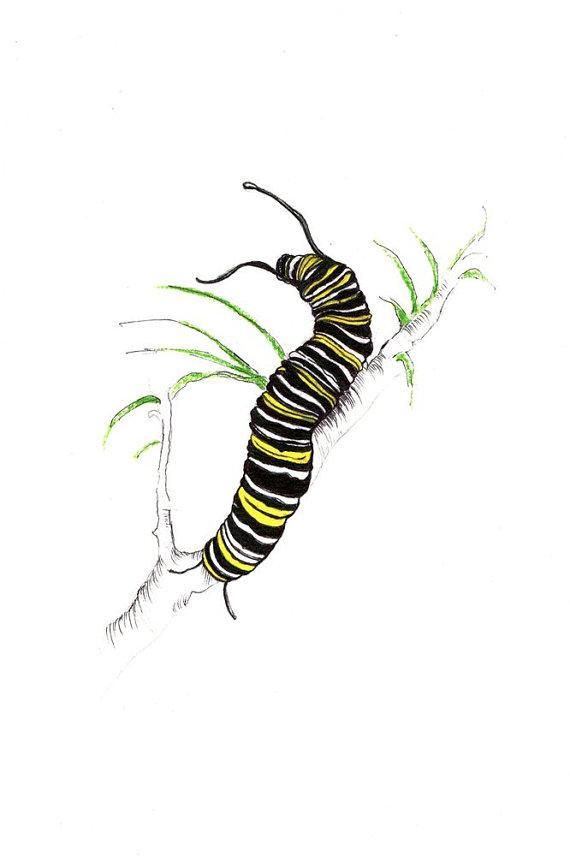 570x856 Monarch Caterpillar Print Digital Print Of An Original Drawing